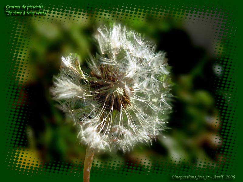 Fleurs des champs for Ou acheter le tapis champ de fleurs