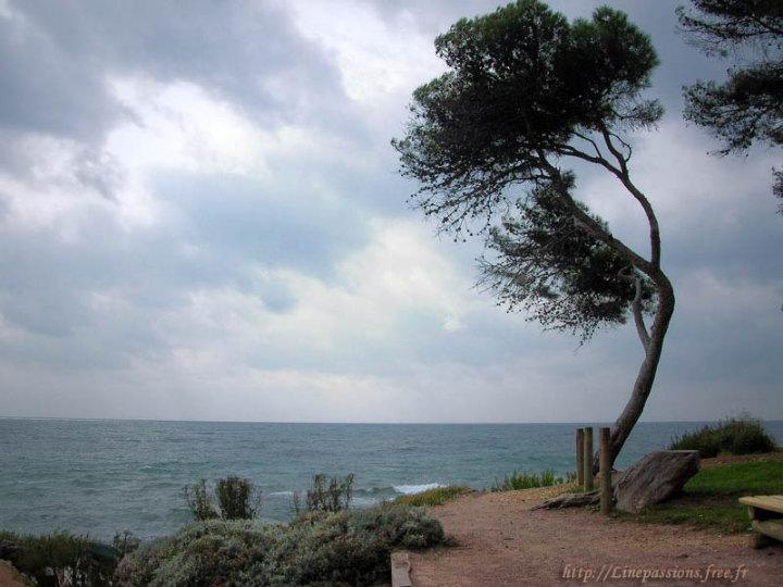 http://linepassions.free.fr/Photo-du-jour/12/12-07_Ciel-d-orage.jpg