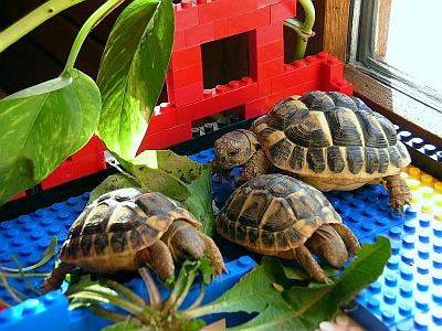 Les tortues. 060203_Tortues_balcon